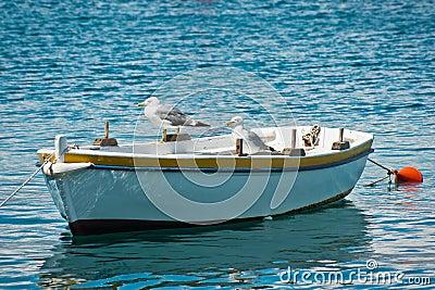 Seagulls on boat