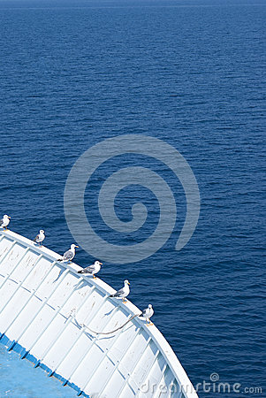 Seagulls on the boat