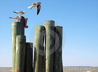 Seagulls on coastline