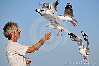 Seagulls coming in very close to man on beach.