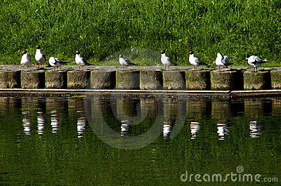 Seagulls on conference
