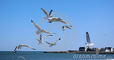 Seagulls in flight above Revere Beach, MA