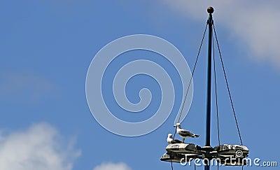 Seagulls on a floodlight pole