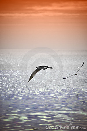 Free Seagulls Flying Royalty Free Stock Photography - 2902097