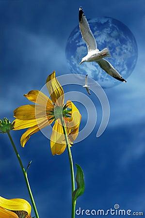 Seagulls flying against a blue sky.