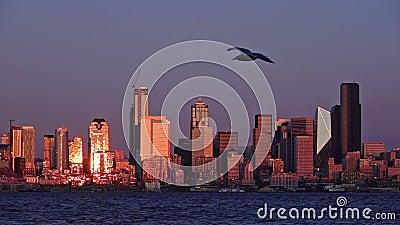 Seagulls glidning framför den glänsande Seattle-skylinen stock video