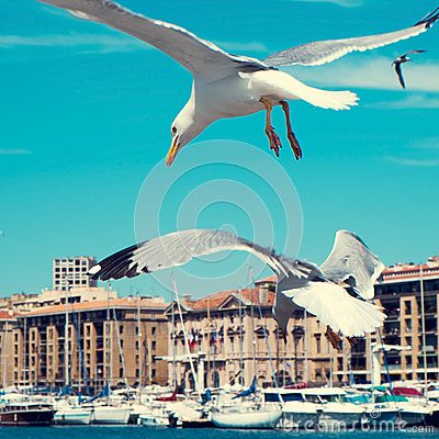 Free Seagulls In The Port Of Marseille, France, Filtered Royalty Free Stock Photography - 54608917