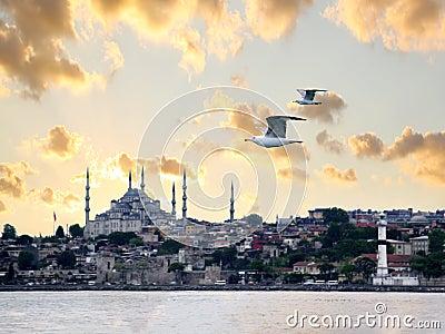 Seagulls on Istanbul