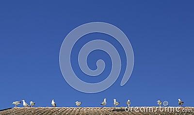 Seagulls at The Leman lake, Evian, France