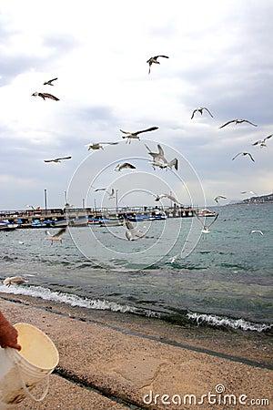 Seagulls at Mondello