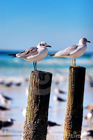 Free Seagulls On A Post Royalty Free Stock Image - 7703846