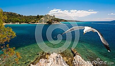 Seagulls over sea shore