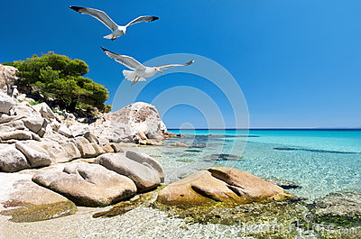Seagulls over sea shore
