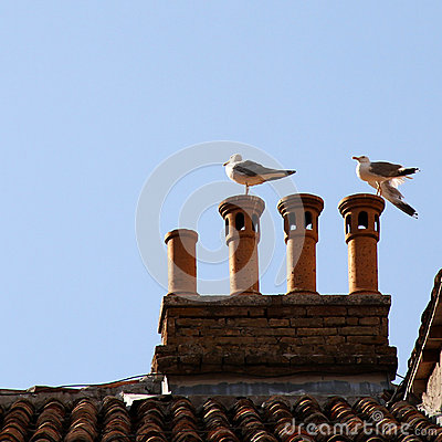 Seagulls on the roof