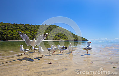 Seagulls on sandy beach