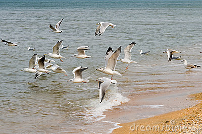 Seagulls and the sea.