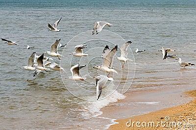 Seagulls and the sea.