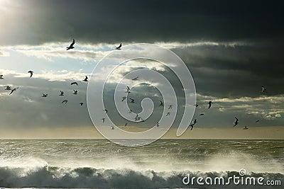 Seagulls between sky and ocean