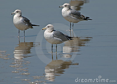 Seagulls standing on the beach