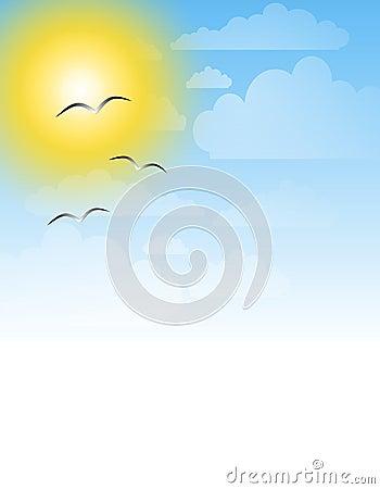 Seagulls Sunny Sky Background