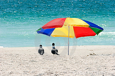 Seagulls Under Beach Umbrella