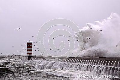 Seagulls wave
