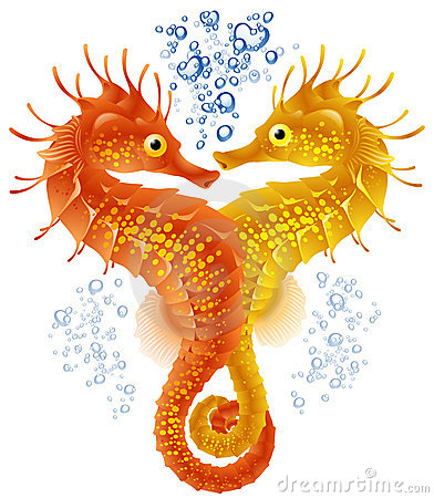 Free Seahorses In Love Stock Photography - 14122392