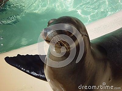 SEAL ATTITUDE