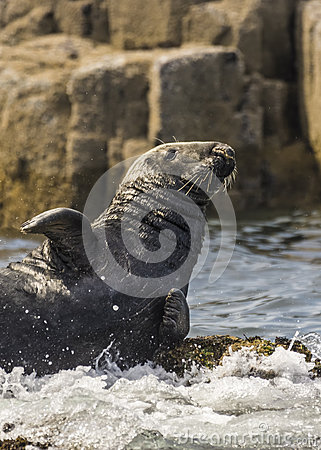 Seal Basking