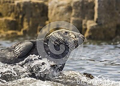 Seal Basking