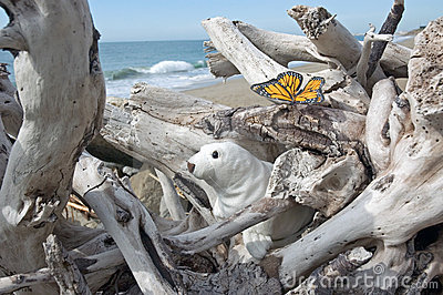 Seal and butterfly