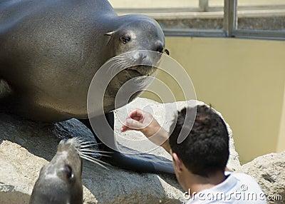 Seal food