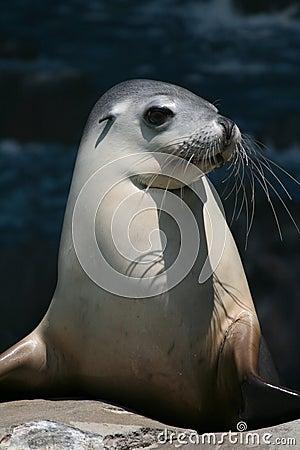 Seal head