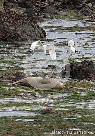 Seal Herons