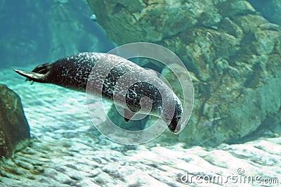 Seal I