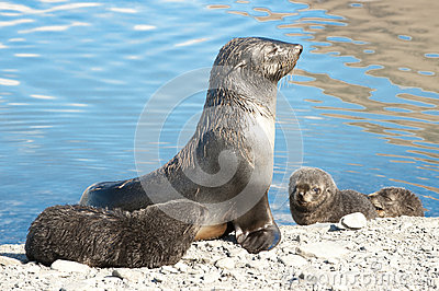 Seal with kids