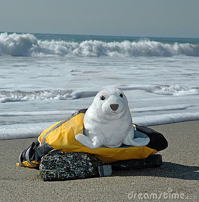 Seal in life jacket