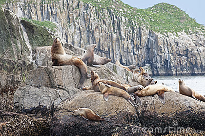 Seal lions
