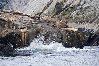 Seal lions on rocky shoreline