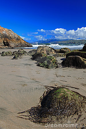 Seal Rock & Pacific Beach in San Francisco