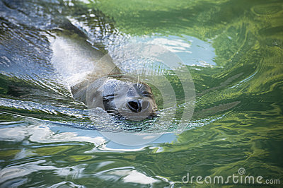 A seal s serenity