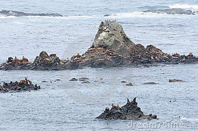 Seal and sea lions