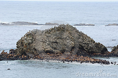 Seal and sea lions on rock