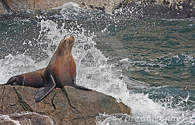 Seal taking a shower