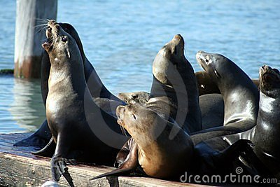 Seals on a pier