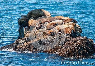 Seals sun bathing
