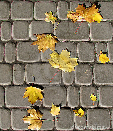 Seamless autumn leaves on cobbles