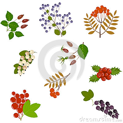 Free Seamless Berries Pattern Stock Image - 92232011