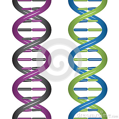 Seamless DNA