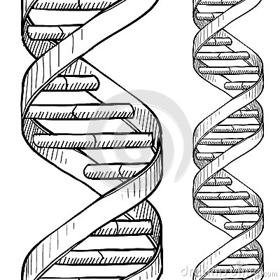 Seamless DNA double helix sketch